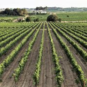 Cycling Wine Country Barcelona