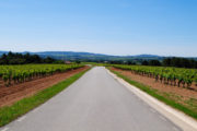 Cycling tour of Barcelona, routes by bicycle, visit cavas and wineries