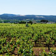 Wine Routes by roadbike Barcelona