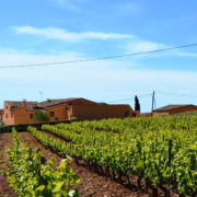 The Penedès and Wine Tourism, visit wineries by bike