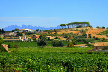 classic penedes bike tour, Road Bike Rentals Barcelona| Hire & Rent a Bicycle.