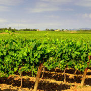 Bike Barcelona Wine and Cava in Penedes. LETSVELO BIKE TOURS