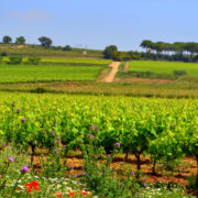 Bike Barcelona Wine and Cava in Penedes. LETSVELO BIKE TOURS
