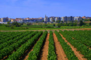 INLAND SOUTH CATALONIA Bike Tour Specialized | Bike Barcelona Wine and Cava in Penedes.